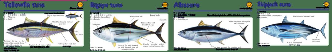 oseanik-tuna