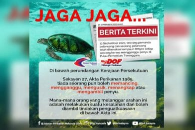 Save Our Turtles!